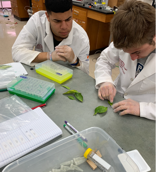 2 students dissecting plants in class