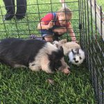 Girl Petting Bunny Next to a Pig